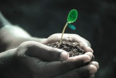 Create an anti-Inflammatory life - Part 1  Hands holding a small green budding plant. Making a point that life can thrive with an anti-inflammatory lifestyle.